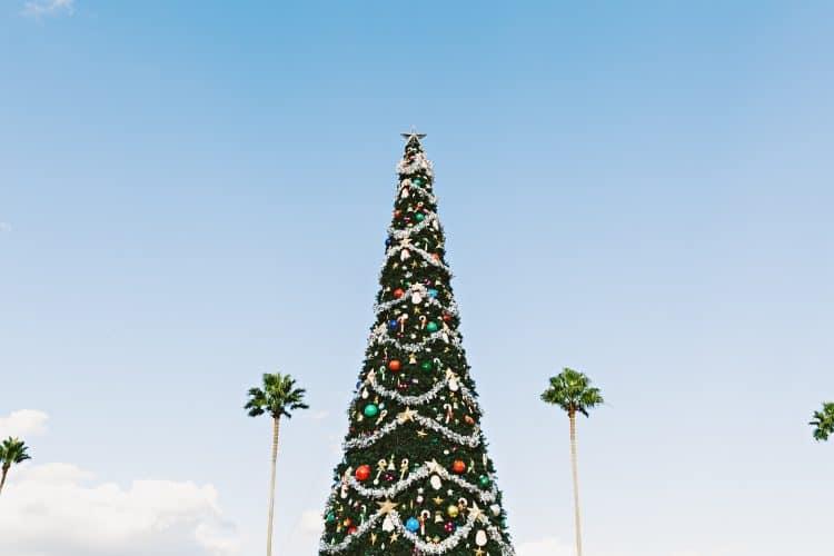 Emigreren Gran Canaria - December update - welke berichten heb jij gemist? Kerstboom