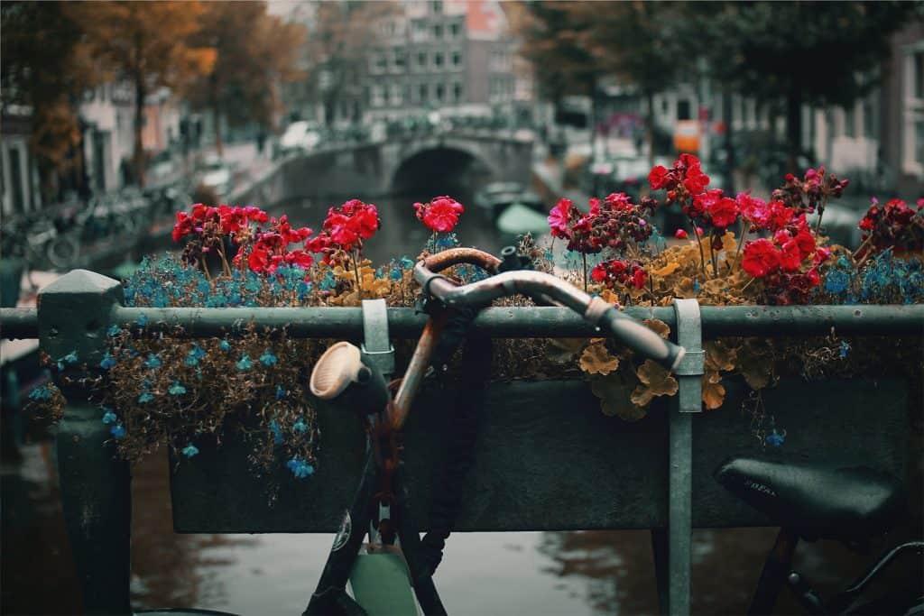 Emigreren Gran Canaria - 5 grote misverstanden over emigranten op Gran Canaria - Nederland beu - Amsterdam