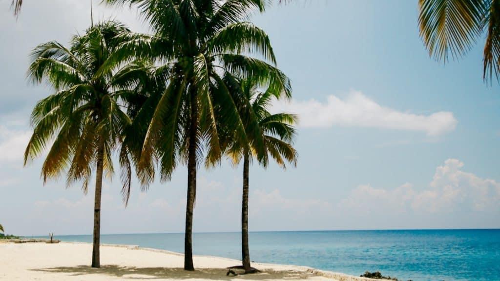 Emigreren Gran Canaria - Emigratie verhaal: Cristina (57) over haar emigratie naar Brazilië - Strand Brazilie palmbomen