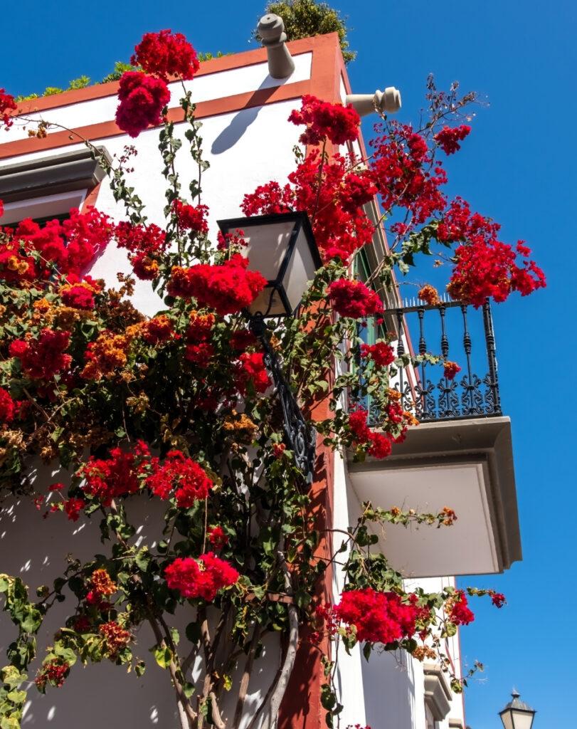 Rode bougainville bloemen aan een balkon in puerto de mogan op Gran Canaria