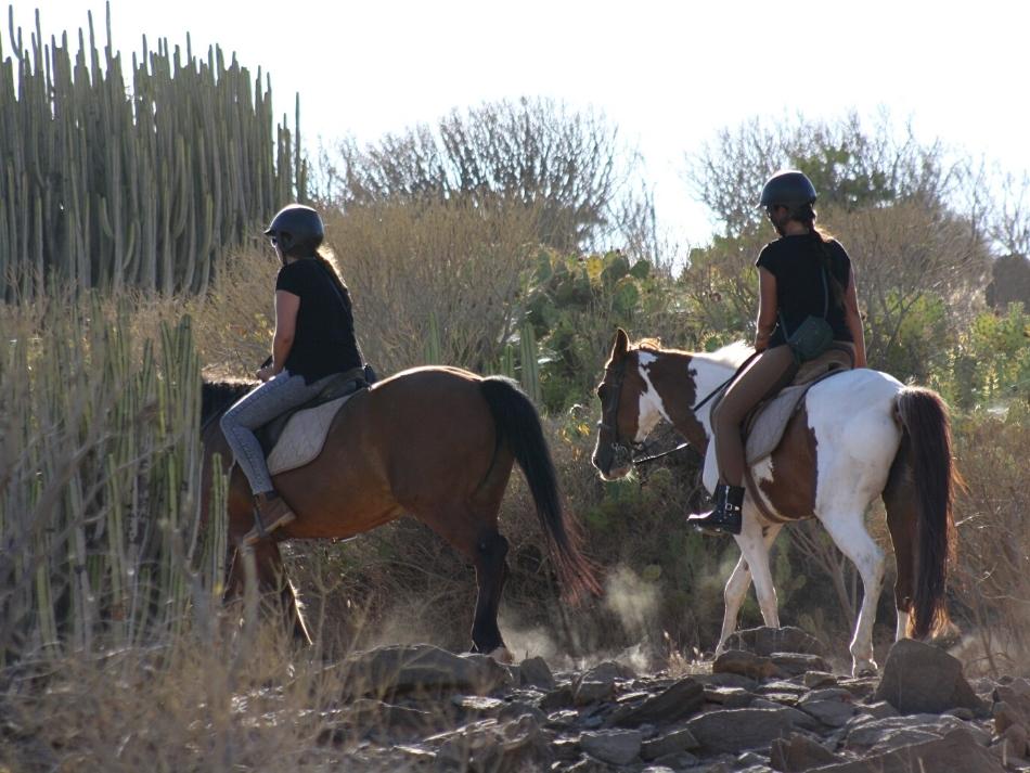 Paardrijden in de bergen van Gran canaria met el salobre horse riding de leukste outdoor activiteiten op gran canaria